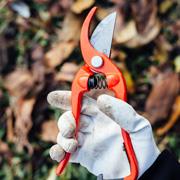 Обрезка деревьев и кустарников осенью: формирующая и омолаживающая