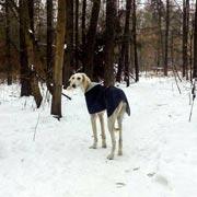 Почему домашняя собака мерзнет на улице зимой