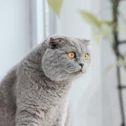 Живи как кот! 12 правил, которым стоит у них поучиться