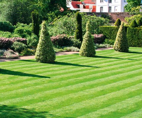 Как правильно посеять газонную траву весной