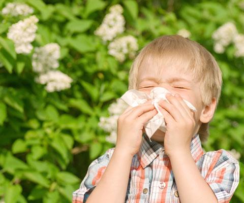 Сенная лихорадка, поллиноз, аллергический ринит: когда пылят деревья и травы