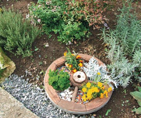 Пряные травы описание сорта для открытого грунта