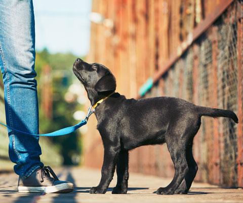 Как приучить щенка к туалету в квартире быстро и к одному месту