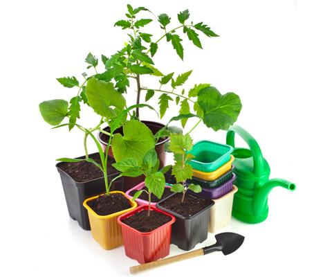 Оптимальная температура для рассады томатов при какой можно выращивать