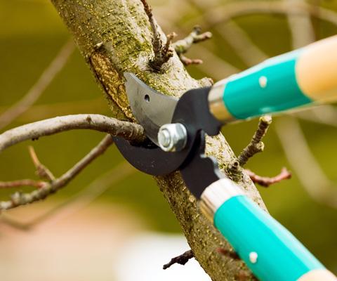 Как правильно обрезать деревья? 2 способа весенней обрезки – для мужчин и женщин. Обрезка яблони и груши в саду