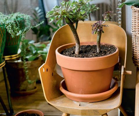 Комнатные растения, горшки и подставки: 10 идей по украшению дома. Цветочные горшки своими руками