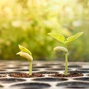 Нужно ли замачивать семена для рассады