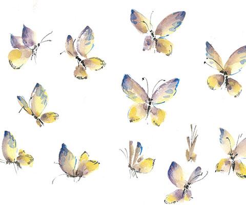 Как нарисовать бабочку красками: мастер-класс для начинающих