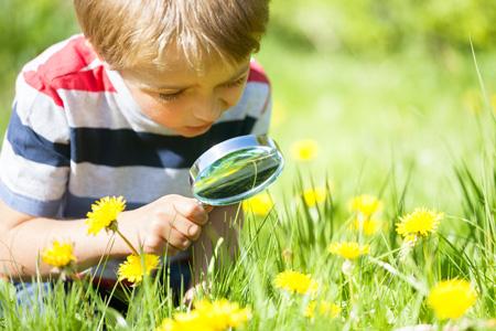 Наблюдения за растениями и животными вместе с ребенком