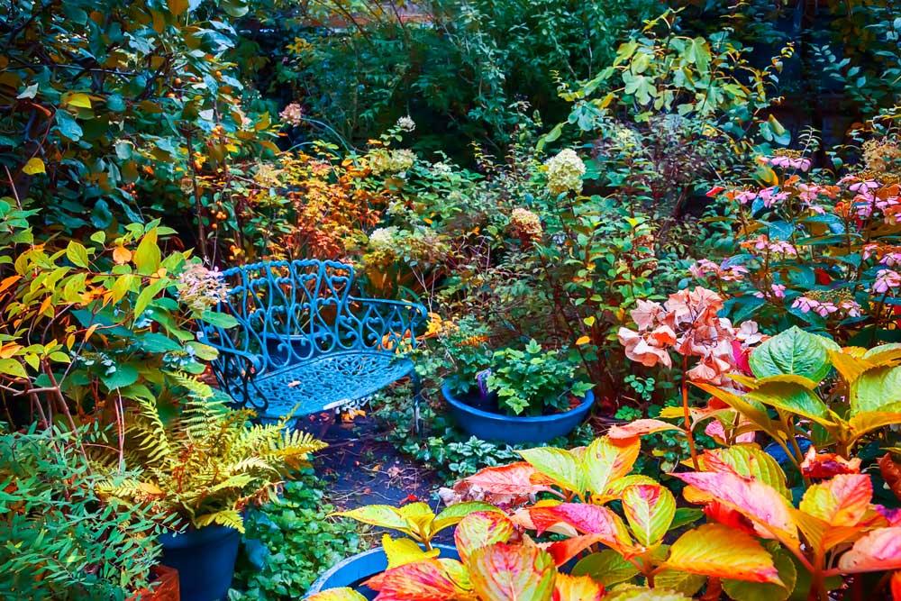 Декоративные растения осенью