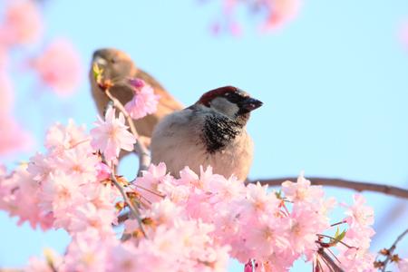 Создаем сад, привлекательный для птиц