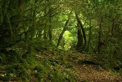 Лес, Абхазия