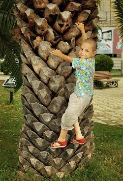 Абхазия, пальмы