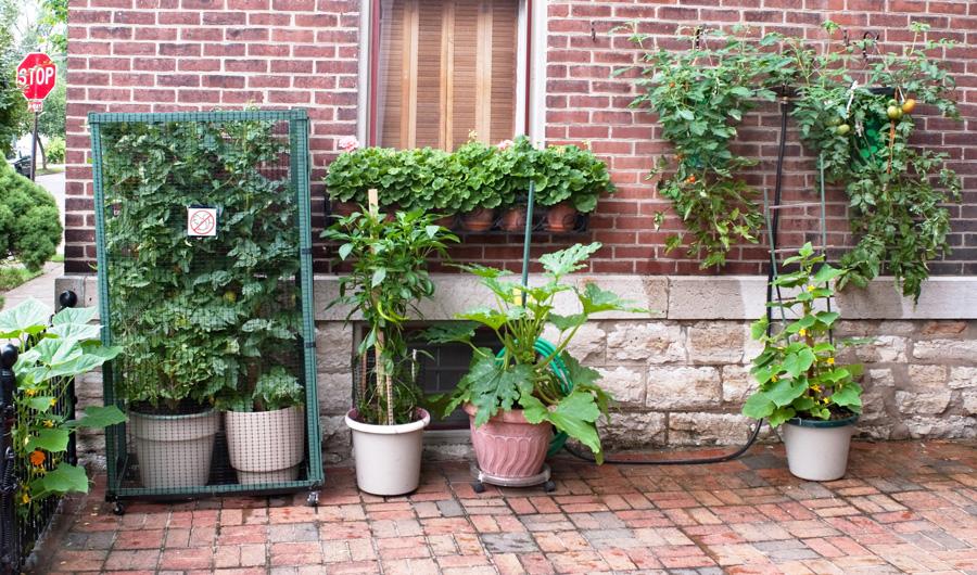 Садовые растения в контейнерах
