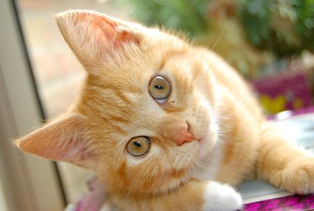 Кашель у кошек – это симптом!