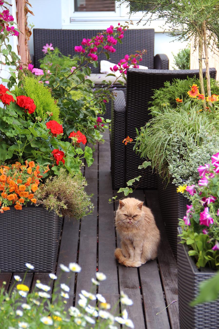Обустройство лоджии: цветы, вьющиеся растения и зона для отдыха