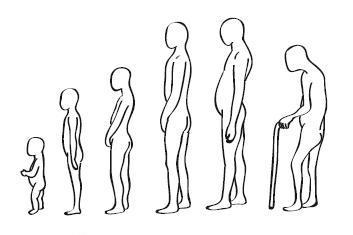 Осанка человека в зависимости от возраста.