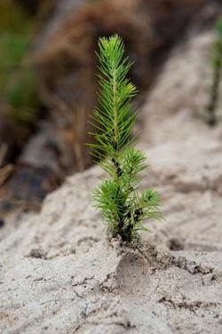 Дерево, посаженное сегодня, — чистый воздух для наших детей завтра