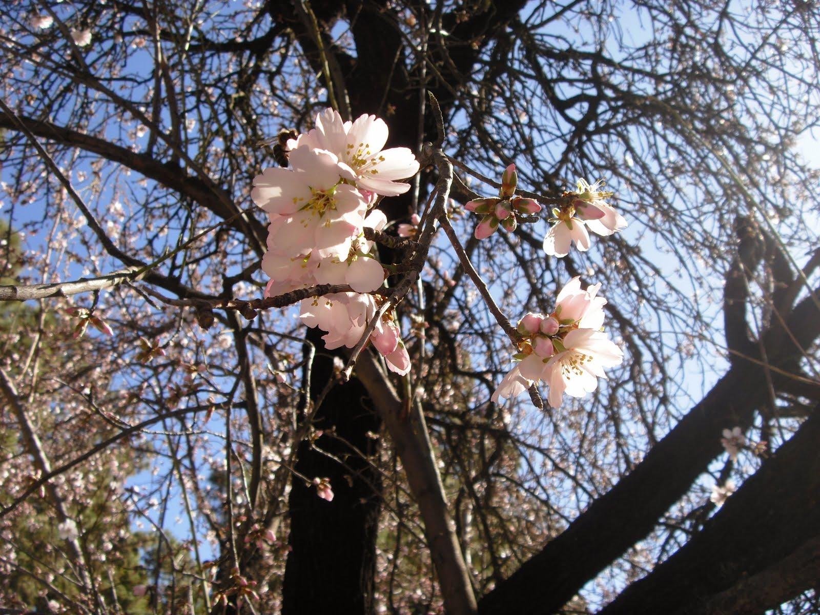 Канары: весна круглый год