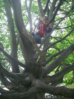 Стокгольм Юргорден очень ветвистое дерево