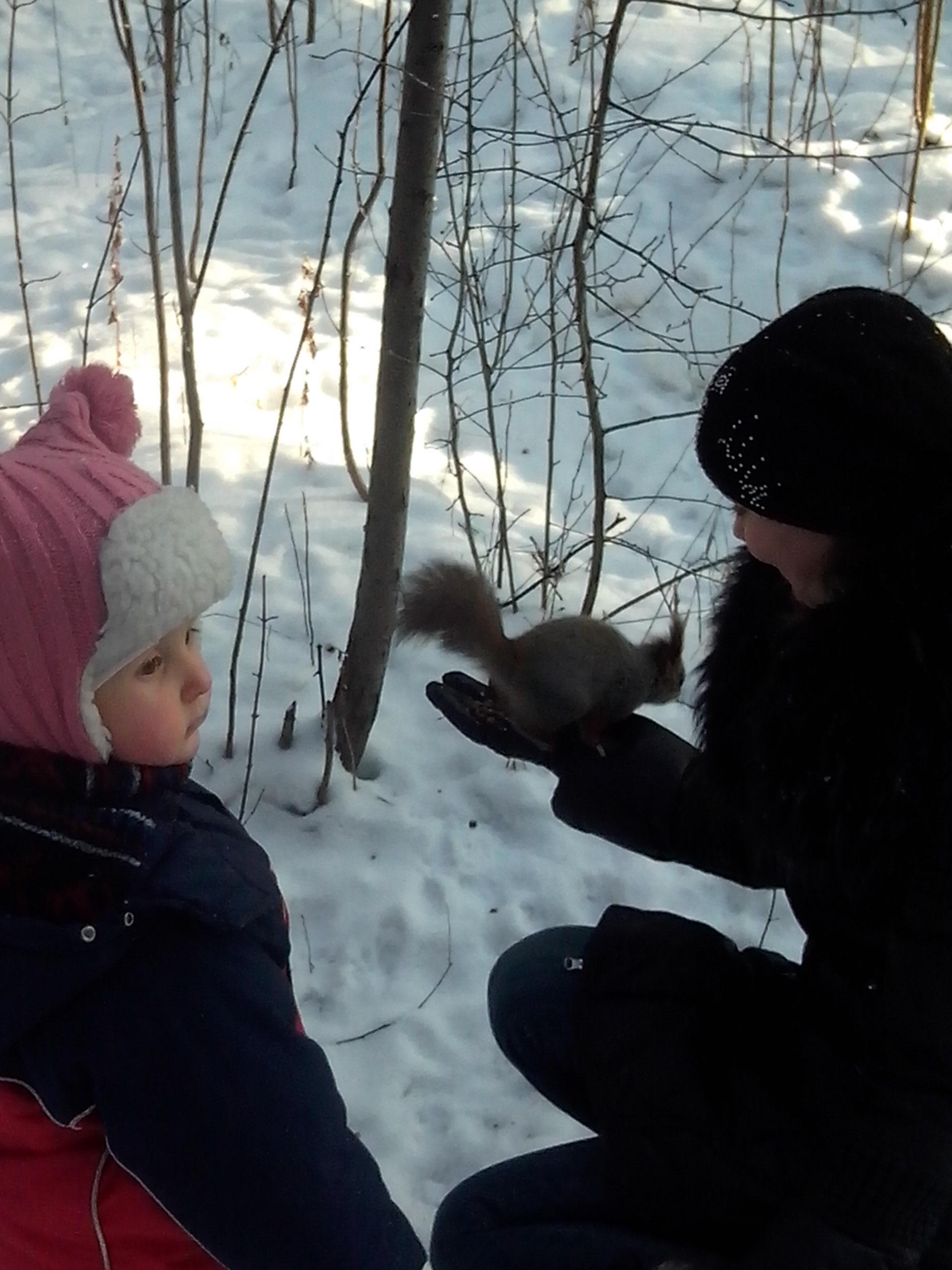 Все краски зимы: коньки, лыжи, тюбинг и забавные белочки