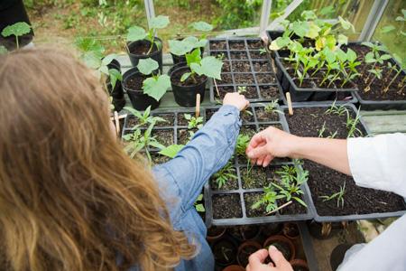 Рассада на подоконнике: правильная емкость для томата, перца, цветов