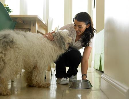 Ваша собака – что она знает о вещах. Часть II