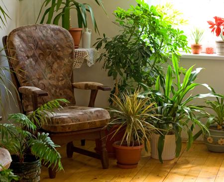 Комнатные растения: полив, освещение, уход. Как правильно?