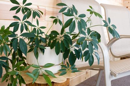 Комнатные растения: какие и где? Правила фитодизайна