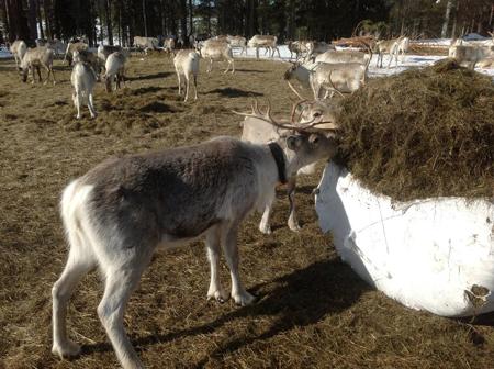 Финляндия: лыжи, горное такси, сауна и хаски. Топ-10 радостей
