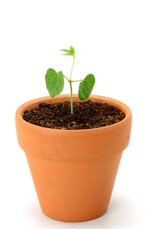 В какой почве лучше выращивать рассаду