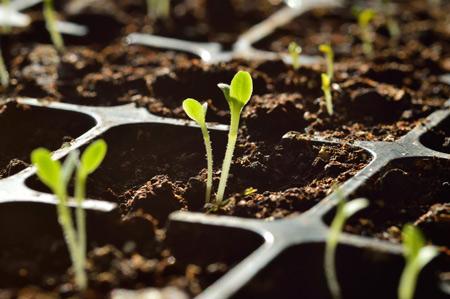 Семена для будущего урожая: хранение и проращивание