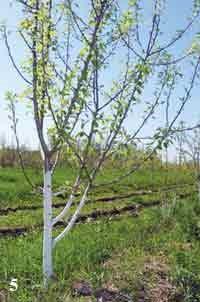Дерева весною картинки