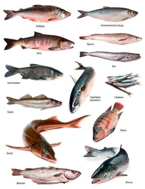 Свежая рыба к праздничному столу: выбираем правильно