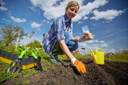 Первый посев в апреле-мае: свекла, морковь, редис