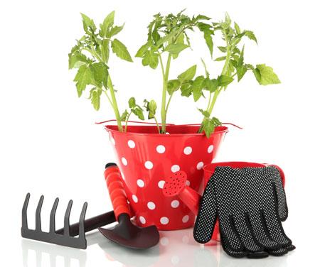 Рассада помидоров: высадка в теплицу, полив и подкормка