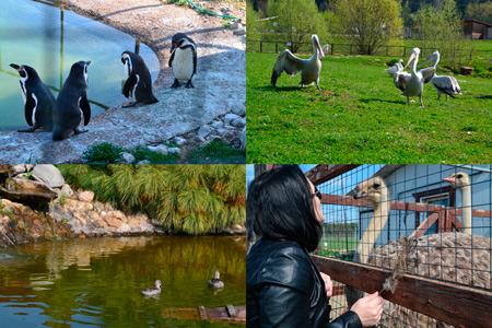 Парк «Воробьи»: павлины, пеликаны, пингвины и… кенгуру