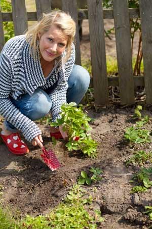 Земляника: как вырастить из семян? Рассада в горшочке и на грядке