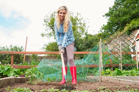 6 вариантов грядок – для красоты и большого урожая