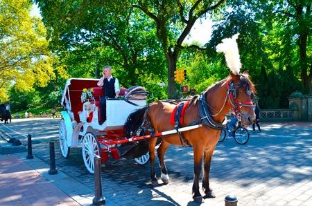 В карете по Центральному парку