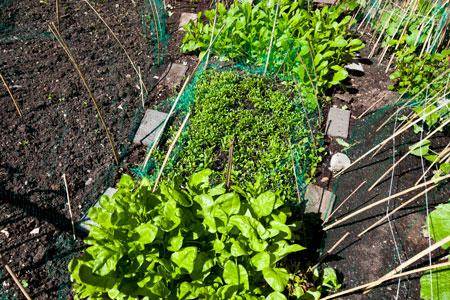 Грядки без прополки. 3 способа борьбы с сорняками весной и летом