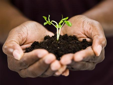 Как сажать рассаду огурцов и помидоров