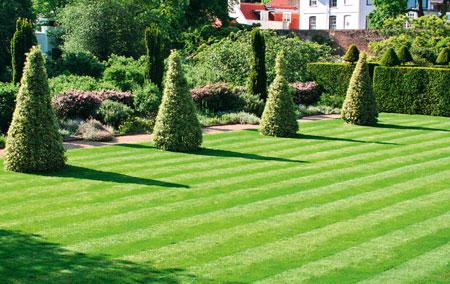 Когда можно сеять газонную траву весной?
