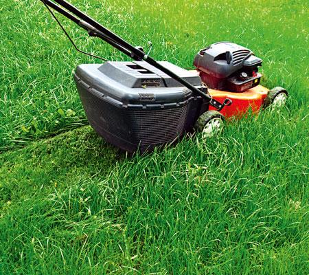 Как сажать газонную траву своими руками