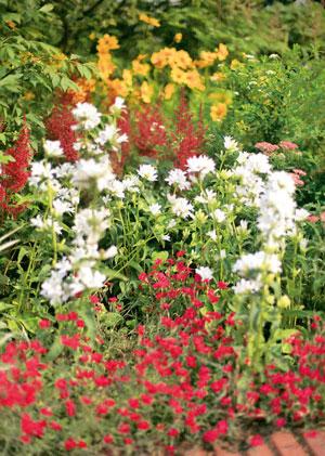 Клумбы и цветники своими руками: красивый вид и легкий уход