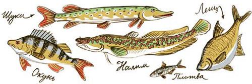 Что приготовить из свежей рыбы