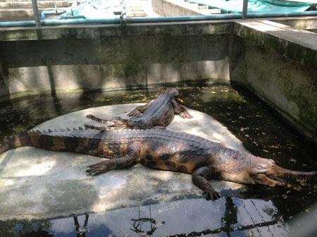Крокодилы и прочее