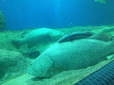 Океанариум Underwater World Pattaya