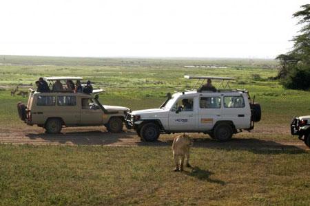 Сафари в национальном парке