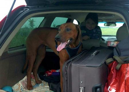 Москва - Черногория на машине с собакой
